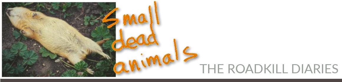 Small Dead Animals